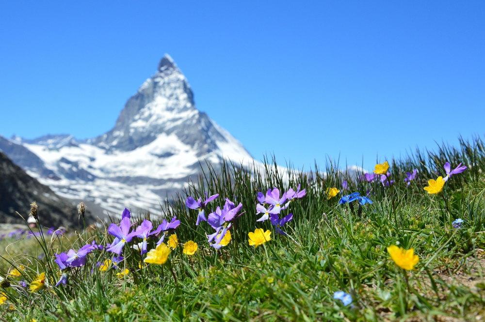 Naturbestattung in der Schweiz
